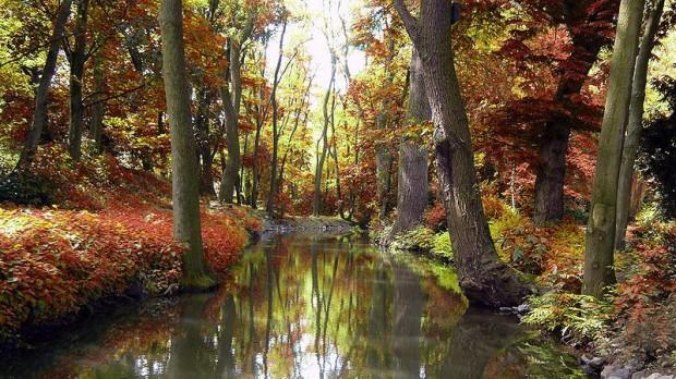 Juraprofessor: Regeringens miljølove bider sig selv i halen