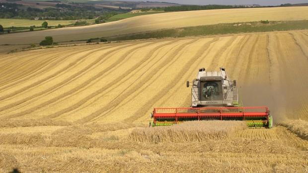 Klimaplanen: Landbruget betaler, forbrugerne går fri – og samfundsøkonomien forbedres